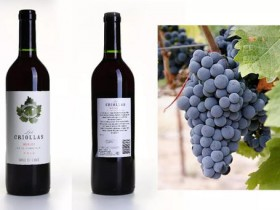 The Criolla Family Grape of Argentina