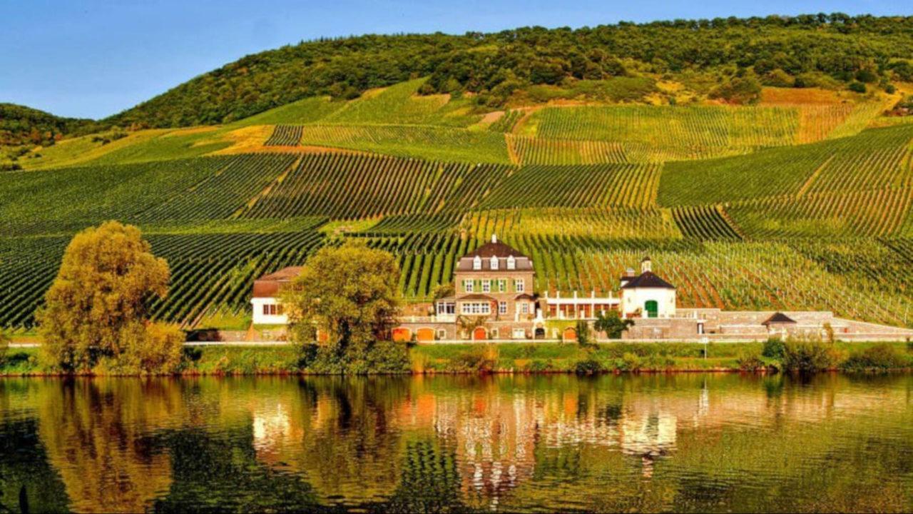 Weingut Dr. Loosen vineyard.JPG_22083534_ver1.0_1280_720.jpg